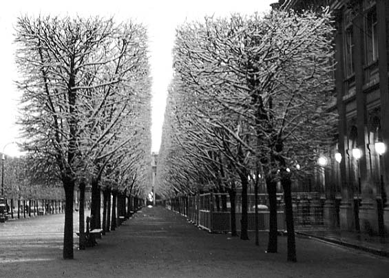 Paris photos in black and white - Palais Royal - Parc in Wintertime